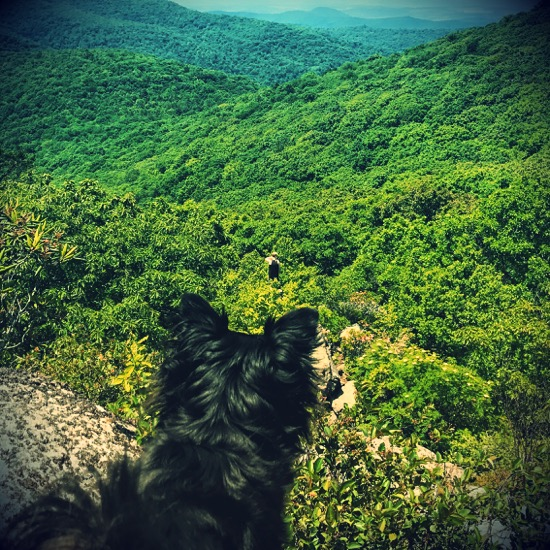 From the vantage point of a little black dog with pointy ears we see a figure far away, down a cliff, and at the center of the picture in the middle of the lushest, greenest, mountain canopy imaginable. The blue mountains arise in the distance.
